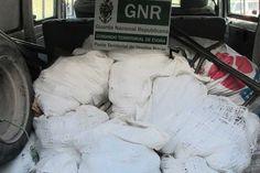 Dois detidos e cerca de meia tonelada de pinhas de pinheiro manso apreendida em Landeira | Portal Elvasnews