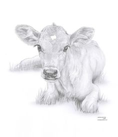 COW Calf baby art pencil drawing invitation