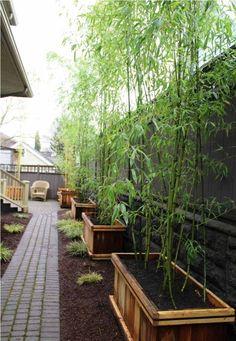 beau jardin avec allée en pavés et bacs à fleurs en bois avec bambou