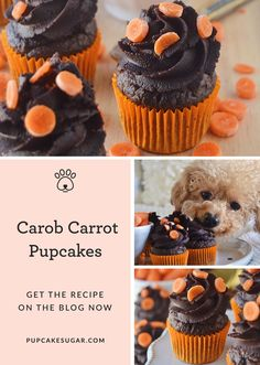 Sugar comes up with the solution to get a good night's sleep and shares her Carrot Carob Pupcakes dog treat recipe for the dog you love to spoil Dog Cake Recipes, Dog Biscuit Recipes, Dog Treat Recipes, Dog Food Recipes, Diy Dog Treats, Homemade Dog Treats, Healthy Dog Treats, Doggie Treats, Dog Snacks