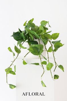 Freshen up your home with artificial plants and greenery! No sun or watering required with high-quality faux plants from Afloral. Simply secure in your favorite vase or planter for an easy refresh. Shop trending artificial plants at Afloral.com.