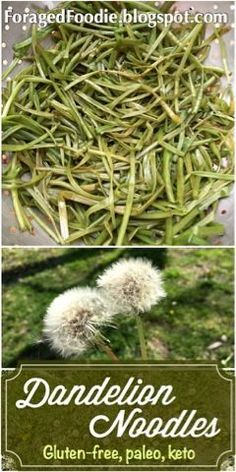 Foraging for dandelion stem noodles. Keto, paleo, 0 calorie. ForagedFoodie recipe