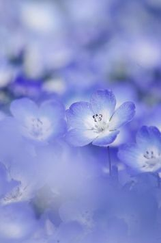 Periwinkle color