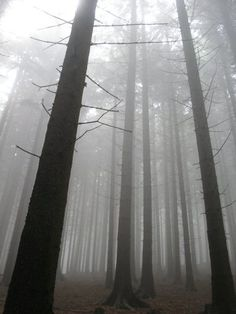 History of the forest in Central Europe - Wikipedia, the free encyclopedia
