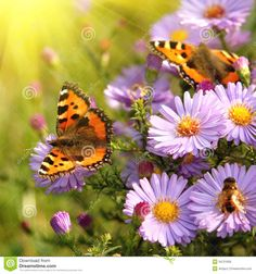 butterfly on flowers Poster Gossamer Wings, Butterfly Pictures, Spring Flowers, Poster, Animals, Image, Butterflies, Illustrations, Google
