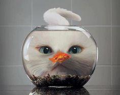 fishyyyy