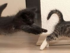 Funny Cats Part One   Cat Pictures and Videos
