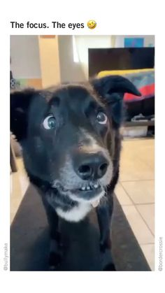 This dog deserves all the tennis balls. (🎬 @bordercrossie) Funny Dog Pictures, Funny Dogs, Photo And Video, Balls, Cute, Tennis, Animals, Instagram, Funny Dog Photos
