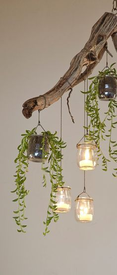 Found materials and small trailing succulents can be combined to make a charming chandelier. Free tutorial with pictures on how to plant a plant / a flower / a tree in under 120 minutes by gardening with eyebolt, branch, and chain. How To posted by S. Driftwood Chandelier, Branch Chandelier, Outdoor Chandelier, Driftwood Art, Tree Branch Decor, Driftwood Projects, Chandelier Lighting, Diy Home Decor, Room Decor