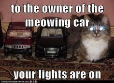 Laughed so hard! God I love cats!
