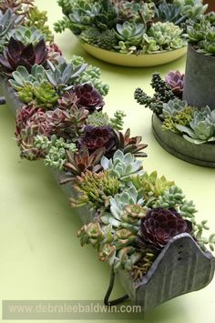 Chicken feeder trough planted with succulents, by Chicweed