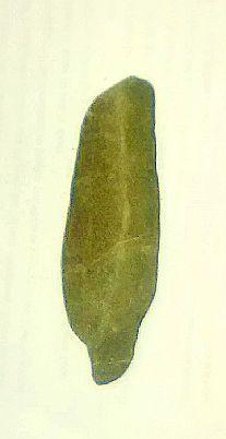 Anthropology, Rock Art, Cactus Plants, North America, Metal, Wood, Glass, Madeira, Anthropologie