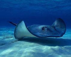Beautiful World Underwater animals Underwater Animals, Underwater Creatures, Ocean Creatures, Underwater World, Under The Water, Majestic Sea Flap Flap, 3d Studio, Underwater Photography, Ocean Life