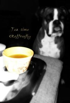 Tea time by ©Raffreefly LoveYourself EyeEmloveyourself Boxer Dogs Boxer Boxerlove Dog AlbumBiella Blog #Raffreefly Elegant Black & White Misticmoment Fashion Fotopoetica Artistic Drink Indoors Food And Drink Coffee - Drink Close-up Adults Only Adult Day