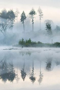 Morning at the Lake! Reflective fog