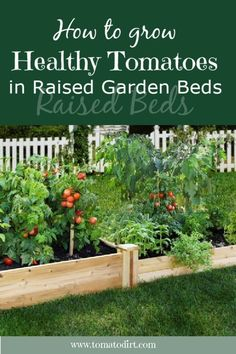 How to grow healthy tomatoes in raised garden beds with Tomato Dirt #GrowTomatoes #HomeGardening Home Vegetable Garden, Tomato Garden, Fruit Garden, Tomato Plants, Tips For Growing Tomatoes, Growing Tomatoes In Containers, Making Raised Garden Beds, Raised Beds, Healthy Fruits And Vegetables