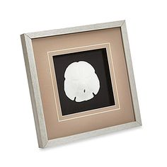 Evoke the pleasure of a beachy destination with this gorgeously mounted sand dollar . Its simple, clean presentation allows this coastal treasure to be showcased properly in your decor.