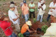 NossaCara.com - Produtores rurais do Projeto Roça do Povo participam de Dia de Campo da cultura de Mandioca
