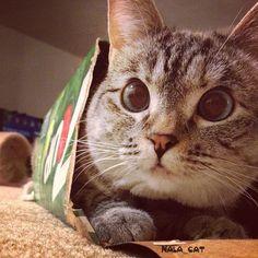 Photo by nala_cat