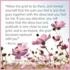 Healing Wisdom from Blackie the angel cat Dog Grief, Pet Loss Grief, Miss My Dog, Miss You Mom, Cat Loss Poems, Animal Communication, Messages For Her, Losing A Pet, Aunt