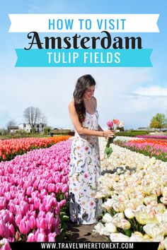 The best guide for visiting the Tulip Fields outside Amsterdam. This is a once and a lifetime bucketlist experience.   PIN NOW READ LATER