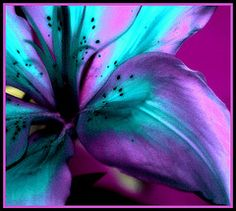 Lily . . .