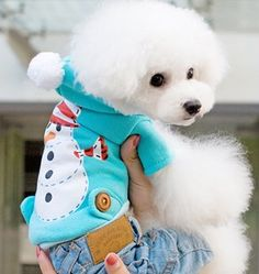 WOW!!! Amazing doggy outfit. Cute Small Dogs, Pet Dogs, Pets, Cute Dog Pictures, Dog Items, Dog Wear, Christmas Animals, Animal Fashion, Dog Coats