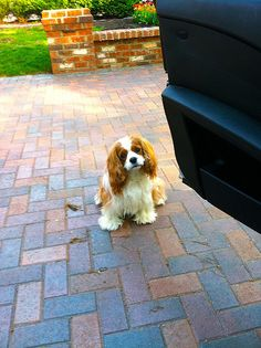 Maury @ Mill Bluff --- My dog Maury wanting to play fetch.