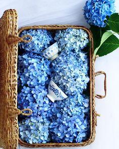 67 Super Ideas For Flowers Wedding Bouquet Blue Inspiration White Wedding Flowers, Big Flowers, Flower Bouquet Wedding, Amazing Flowers, White Flowers, Beautiful Flowers, Wedding Blue, Tropical Flowers, Purple Flowers