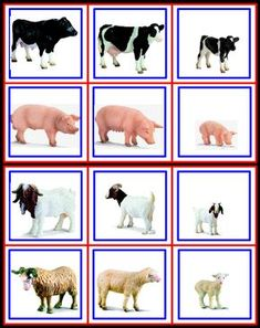1 million+ Stunning Free Images to Use Anywhere Farm Animals Preschool, Animal Activities For Kids, Farm Animal Crafts, Animal Crafts For Kids, Montessori Activities, Preschool Education, Preschool Worksheets, Preschool Crafts, Teaching Kids