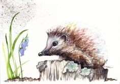 Original-Watercolour-Painting-by-Be-Coventry-Animals-Realism-Hedgehog-Bluebell