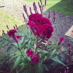 Es una hermosa flor del jardín, en la casa de mi Mamá