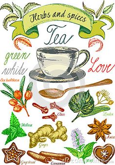 Herbs and spices, tea set, Tea leaves for tea preparation, vector graphic with herbs, decorative vintage background with tea theme,  hand drawn vector graphic