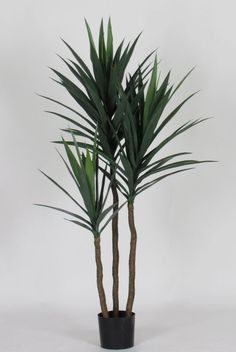 - piante artificiali dracena yucca