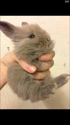 Jeg kiggede lige gamle billeder og så, så jeg lige dette billede af min Bunny Blue da hun var lille ååååhh bliver varm om mit hjerte fik nemlig dette billede inden jeg måtte få hinde hjem ❤️