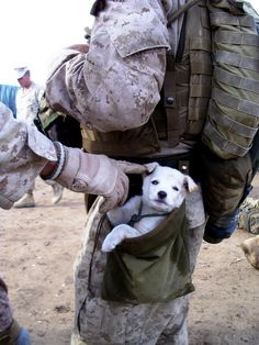 "untitled Military Dog Picture of the Week: Troops & Their Puppies! ""Real"" men are kind to animals! #HappyAlert via @Happy Hippo Billy"