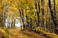 Jesień często wiąże się z obniżeniem nastroju. Dlaczego tak się dzieje i jak temu zaradzić znajdziecie w ninijeszym artykule.
