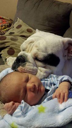 Los padres dejan un momento a su bebé con el perro. Cuando vuelven, los encuentran así