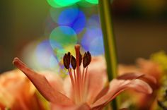 Xmas Mood Flower by David Gonzalez on David Gonzalez, Incense, Xmas, Mood, Flowers, Christmas, Navidad, Noel, Royal Icing Flowers
