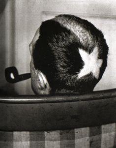 Marcel Duchamp, Tonsure, 1919