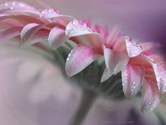 COMFORT by Charo  Arroyo on 500px