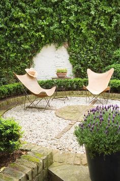 Climbing plants such as star jasmine, native clematis or Mexican blood vine (Distictis) can be trained to grow up pergolas, walls and other structures. Porch Garden, Pergola Garden, Garden Shrubs, Lush Garden, Diy Pergola, Patio, Modern Pergola, Outdoor Pergola, Outdoor Spaces