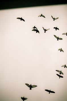 """Let the skies be filled with birds of every kind."" (Genesis 1:20) Idn't it so perty? ^-^"