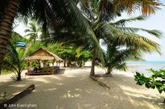 Salad Beach, Koh Phangan, Thailand; coconut palms and casuarina trees provide ample shade at the top of this wide beach.