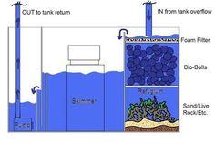 Resultado de imagen para marine aquarium design Aquarium Design, Saltwater Aquarium Setup, Aquarium Sump, Big Aquarium, Aquarium Filter, Saltwater Tank, Marine Aquarium, Reef Aquarium, Aquarium Fish Tank