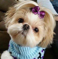 Diamond Painting & Cute Shih Tzu & Floating Styles & Diamond Embroidery & Paint With. The post Diamond Painting & Cute Shih Tzu appeared first on Bruce Kennels. Shih Tzus, Shih Tzu Hund, Shih Tzu Puppy, Shih Poo, Cute Puppies, Cute Dogs, Dogs And Puppies, Doggies, Shih Tzu Hair Styles