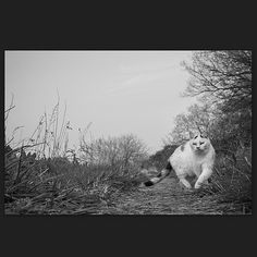 Cat April 2014 #cat #blackandwhitephotography