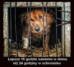 Zdjęcie Pitbulls, Sad, In This Moment, Pets, Animals, Doggies, Quotes, Wolf, Education
