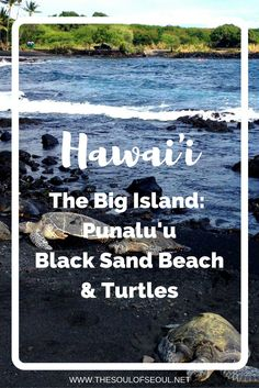 Hawaii, USA: The Big Island: Punalu'u Black Sand Beach & Turtles. Have you ever wanted to see turtles up close and personal in their natural habitat? This is the best place on the Big Island to see turtles AND to take a dip too! Hawaii Vacation, Hawaii Travel, Beach Trip, Vacation Trips, Travel Usa, Family Vacations, Black Sand Beach Hawaii, Big Island Hawaii, Hawaii Usa