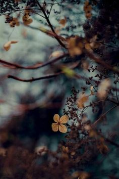 Autumn Blue and Brown / Bokeh Dark Autumn, Autumn Day, Autumn Leaves, Fall, Winter, Autumn Nature, Autumn Garden, Jolie Photo, Bokeh